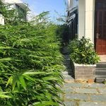 147089098 3487337884710125 2216517606503779056 n Simple Garden Three Bedrooms House for rent In Cam Thanh Hoi An