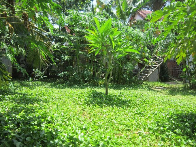 23592466 1960282610905550 2858793573951376479 o Garden Homely Two Bedrooms House For Rent An Bang Beach Hoi An